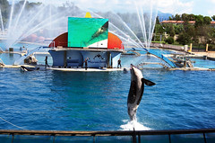 IMGP1076 (rum_den_1986) Tags: dolphin orca dauphin antibes marineland orque