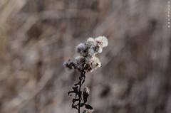 peacefull-standing (culttree) Tags: camera nikon focus 55mm manual nikkor f28 kamera ais lenses objektiv d7000
