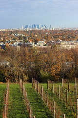 Vignoble de Saint Germain en Laye (StephanExposE) Tags: france automne canon 50mm vineyard autum ladefense chateau vignoble iledefrance saintgermainenlaye 600d stephanexpose