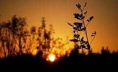 (asier.quintana) Tags: sunset sun colour sol nature de atardecer amazing nice nikon plantas day autum country puesta basque d60 gorozika
