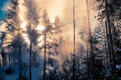 Yellowstone-9