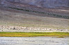 Lone biker (BoXed_FisH) Tags: travel autumn india lake mountains film water grass rocks asia day cloudy kodak overcast olympus tso leh barren om1 ladakh pangong ektar the4elements 4elements