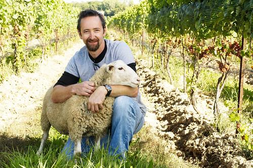 paul_sheep_LG