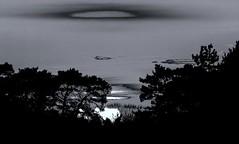 Dark Slide Of The Moon (pogmomadra) Tags: trees sunset bw sunlight moon tree blackwhite sunday slide finepix slider moonlight cliche treehuggers hss slid hs30 sliderssunday happysliderssunday hs30exr fujifinepixhs30exr notadoginthispictureeither