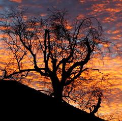 114 in 2014 # 38 Dawn (groovygran2012) Tags: sky tree silhouette sunrise derbyshire local glossop