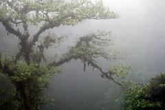 Misty Trees (Adam - Thornton) Tags: cloud costa fog forest rica