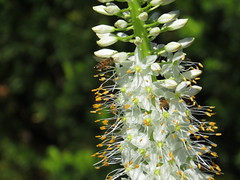 IMG_0835 (Naturecamhd) Tags: wood nyc newyorkcity travel flowers trees wild vacation plants plant ny newyork flower tree green nature grass animal animals forest canon garden out insect botanical outside outdoors woods woodlands branch natural gardening outdoor bronx wildlife branches powershot bee greenhouse bloom destination greenery botanic thebronx wilderness eco botanicalgarden nybg hs canonpowershot newyorkbotanicalgarden bx canonsx seasonalwalk sx50hs canonpowershotsx50hs