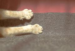 Felix (anngreen333) Tags: light red summer sun wool animal cat fur solar paw mimi claw bliss mur drowsiness clutches mimimi