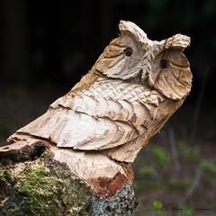 Fake Bird Man Made - Falscher Vogel von Menschenhand (Uli) (Uli-Joe) Tags: wood holz holzkunst ahlhornerfischteiche