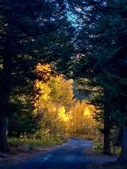 Shades of Autumn (dbushue) Tags: autumn fall aspens light shadows morning glow golden road park nationalpark rockymountainnationalpark trip vacation oldfallriverroad colorado 2016 october newhome mountainhome