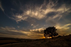 The Tree and the Sun (nickneykov) Tags: nikond750 nikon d750 samyang 14mm bulgaria landscape outdoors sunset sun tree clouds
