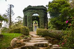 DSC_5414 (sergeysemendyaev) Tags: 2016 rio riodejaneiro brazil jardimbotanico botanicgarden     outdoor nature plants    green  beauty