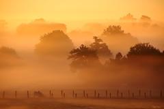 (martine_ferron) Tags: matin leverdesoleil brume automne arbres