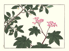 Japanese ternstroemia and Japanese meadowsweet (Japanese Flower and Bird Art) Tags: flower ternstroemia gymnanthera pentaphylacaceae meadowsweet filipendula purpurea rosaceae hoitsu sakai kiitsu suzuki kimei nakano nihonga woodblock picture book japan japanese art readercollection