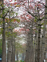 (judie35) Tags: tree