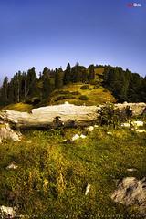 Mushkpuri Top (AQAS.Clicks) Tags: landscape pakistan nature tracking nathiagali murree miranjani mushkpuri forest dusk sunlight