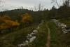 Lungo i sentieri del Carso (paolo-p) Tags: alberi trees linee lines nuvole clouds carso trieste
