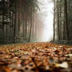 Autumn light (akarakoc) Tags: autumn light fujifilm xf1655 xpro2 red green fog foggy tree october forest fujixseries color