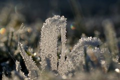 frostig  / frosty (2) (Ellenore56) Tags: 29112016 frostig frosty frost 7c kalt cold cool gefroren frozen ice iced vereist frosted icy rimy freeze wetter weather feder feather quill plume eiskristalle kristalle eis diamond icecrystal crystal lichtbrechung refraction wasser water h2o detail makro macro moment augenblick sichtweise perception perspektive perspective reflektion reflection reflexion farbe color colour licht light inspiration imagination faszination magic magical natur nature nahtour sonyslta77 ellenore56