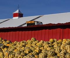 Sauvie Island Melon Harvest 3181 B (jim.choate59) Tags: melons fruit barn red harvest farm sauvieisland oregon autumn jchoate rural fall season textures patterns round on1pics