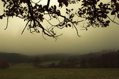 Eifel (Netsrak) Tags: forst natur nebel wald fog forest mist nature woods eifel landscape landschaft outdoor ast ste branch branches leaf leaves blatt bltter autumn fall herbst november