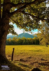 Cades Cove (The Suss-Man (Mike)) Tags: cadescove fence field goldenhour greatsmokymountainsnationalpark mountains nature northgeorgiaphotographyclub samsunggalaxys7edge smokymountains sussmanimaging tennessee thesussman tree
