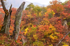 Naruko Canyon in autumn 2016 ,  (Shinji.Nagashima) Tags:
