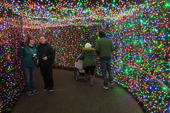 Tunnel of Love IMG_5700 (SunCat) Tags: oregon zoo zoolights washingtonpark portland pdx pnw local all 2016 shaun erin
