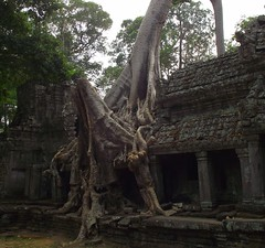 ANGKOR TEMPLES TREES (patrick555666751) Tags: angkor temples trees tree arbres arbre arboles flickr heart group asie du sud est south east asia cambodia cambodge angkortemplestrees camboya kambodscha cambogia camboja cambodja