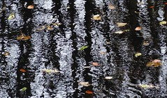 (Edinburgh Nette ...) Tags: waterofleith november16 leaves rivers flow weir abstracts reflections ribbet