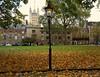 Gas lamp,  Dean's Yard, Westminster,  London,  November 2016 (sbally1) Tags: deansyard westminster autumn leaves fall london gaslamp victorian westminsterabbey