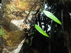 apidae_julio-16_02 (Reinaldo Aguilar) Tags: apidae abejas