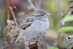 (careth@2012) Tags: wildlife beak feathers