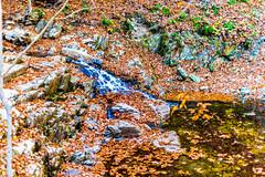 Hilton Area (11-10-16)-041 (nickatkins) Tags: fall fallcolors fallcolor fallfoliage autumn water sun sunlight stream