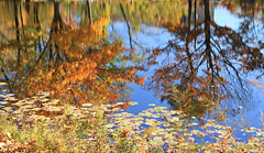 Who's Orientation is it, Anyway? (chantsign) Tags: reflection water fall autumn trees pond leaves upsidedown impressionist floatingleaves