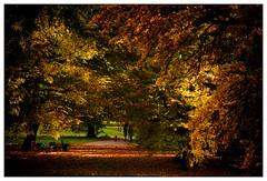 Herbstlicht  light in autumn (frodul) Tags: hannover ni deutschland baum blatt blattfrbung gelb georgengarten herbst herrenhausen jahreszeit laub laubfrbung natur weg park nature autumn yellow