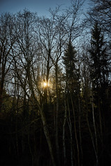 A Forest (Dani Mettler) Tags: forest wald baum bume sun sonne sonnenstern stgallen