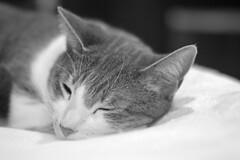 DSC_0040 (kaymann+l+woo) Tags: catsofinstagram cats cute