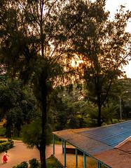 Solitary (muntaseerrahman) Tags: bigtree littlegirl sunsunray tree dhaka dhakadivision bangladesh