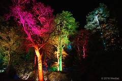 DSC04213 (Twareg) Tags: 2016 aboretum bpw enchanted forest westonbirt bathphotowalk gloucestershire england