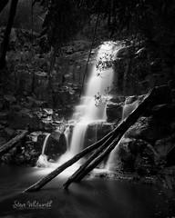 Step Falls....... in monochrome. (SteveWhitworthPhoto) Tags: australia tasmania northerntasmania nietta castracircuit stepfalls waterfall longexposure monochrome bw blackwhite lowkey nikon nikond800e nikon2470mmf28
