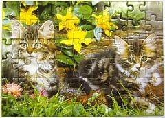 Two Tabbies (Leonisha) Tags: puzzle jigsawpuzzle cat chat katze ktzchen kittens flowers blumen