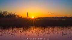 Cape May Lighthouse Sunset (Mike Ver Sprill - Milky Way Mike) Tags: capemay lighthouse sunset new jersey reflections reflect wheat tall grass water marsh bay shore seascape landscape mike ver sprill michael versprill milky way hike with nikon d800 wide angle glow sun seaguls gulls guls birds silhouette beautiful serene peaceful travel explore sunstar sunburst star