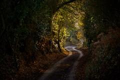 Lane (Future-Echoes) Tags: 4star 2011 curve essex lane leaves light road shadow tamron tamronsp90mmf2811macro trees wickhambishops winding