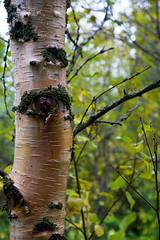 Eye spy (kzoop) Tags: iceland travel vacation europe lake myvatn nature hofdi tree