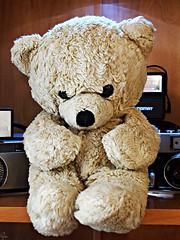 World Day of the Teddy Bear (Oczyma Duszy) Tags: światowydzieńpluszowegomisia miś pluszak zabawka martwanatura olympusepl5 mzuikodigital worlddayoftheteddybear teddybear toy stilllife