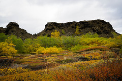 Fall colors (kzoop) Tags: dimmuborgir myvatn iceland travel vacation europe nature lava lavafield nat autumn fall rocks rockformation