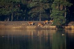 Steil. (limburgs_heksje) Tags: nederland niederlande netherlands noord brabant beekse bergen safaripark dierenpark
