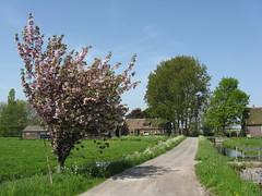 IMG_6966 (Momo1435) Tags: nederland groene hart alphen meije aarlanderveen ter aar