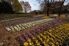 20161204-DS7_6457.jpg (d3_plus) Tags:  a05 wideangle d700 thesedays  architecturalstructure   kanagawapref   sky park autumnfoliage  japan   autumn superwideangle dailyphoto nikon tamronspaf1735mmf284dild  street daily  architectural  fall tamronspaf1735mmf284dildaspherical touring streetphoto  nikond700 tamronspaf1735mmf284 scenery building nature   tamron1735   tamronspaf1735mmf284dildasphericalif   autumnleaves